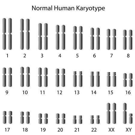 Normal human karyotype Stock Illustratie