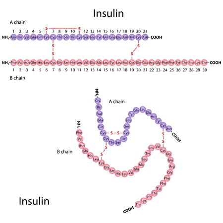 Structure of human insulin Ilustrace