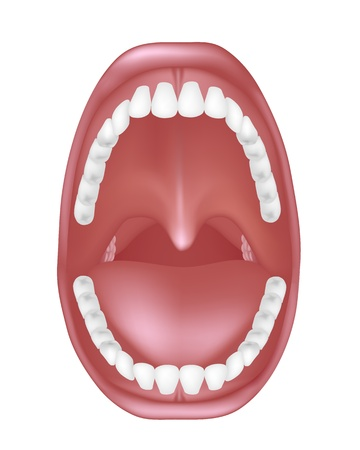 cavities: Mouth anatomy