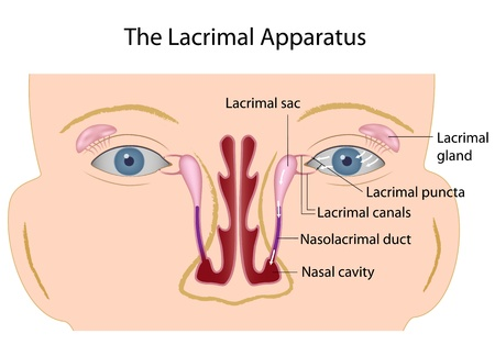 nasal: The lacrimal gland