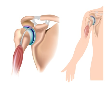 Shoulder anatomy with acromioclavicular joint Vectores