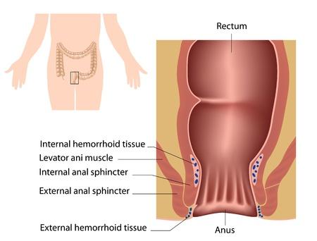 digestive health: El canal Vectores