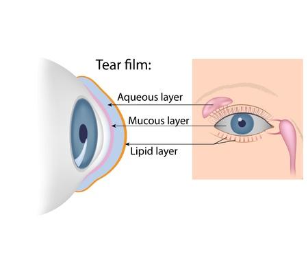 cornea: Lacrime composizione chimica