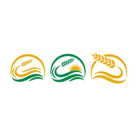 Set of Simple wheat in yellow and green design illustration for bakery Ilustração