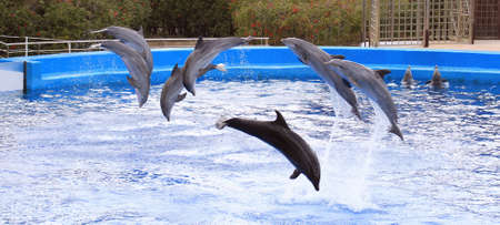 Dolphins photo