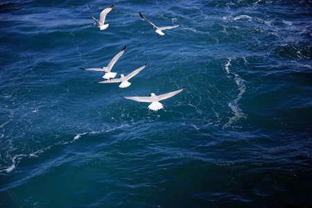 Seagulls Stock Photo - 17375485
