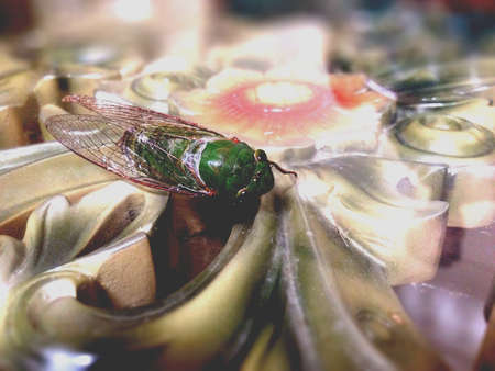 beautifull: GREEN FLY WAS ONE OF BEAUTIFULL FLY IN INDONESIA
