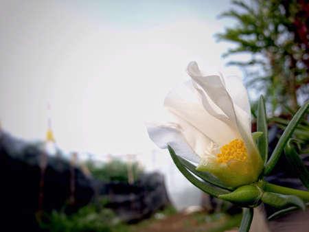 beautifull: Beautifull White Flower