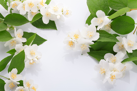 White flowers of jasmine on the white