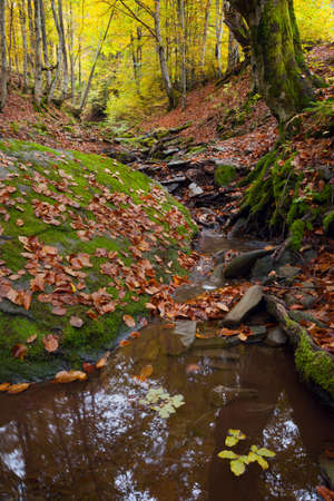 streamlet: Beautiful autumn forest with streamlet Stock Photo