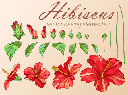 red hibiscus. Desing elements