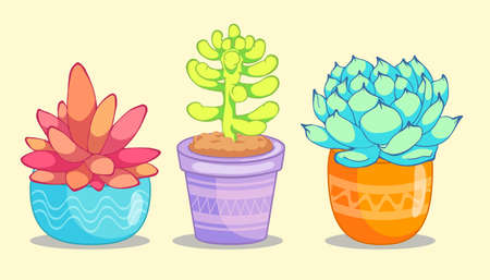 three succulent flower on yellow background. Vector illustration is suitable for greeting cards and prints on t-shirts. Illustration
