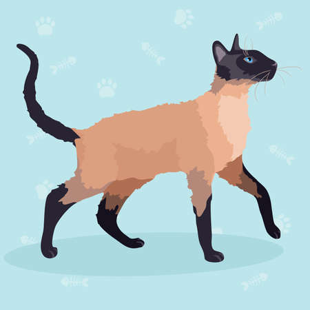Purebred Siamese cat Vector illustration. Illustration