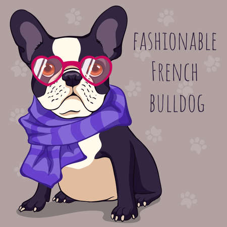 fashionable Cute French bulldog with a black and white color of wool in pink glasses and a purple scarf. Illustration