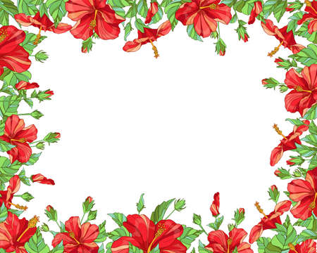 Vector horizontal rectangular frame with red hibiscus flowers on white background. Floral design for cosmetics, perfume, beauty care products. Can be used as greeting card, invitation card or wedding illustration. Ilustrace