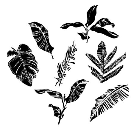Vector set with compositions of graphical tropical leaves, palm leaves,banana leaves, monstera and jungle plants. Banque d'images - 144173973