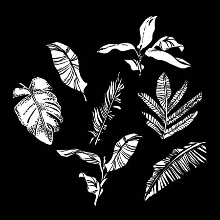 Vector set with compositions of graphical tropical leaves, palm leaves,banana leaves, monstera and jungle plants. Banque d'images - 144174295