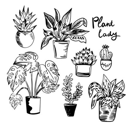 Vector illustration with house plants in pots in black and white colors. Perfect for poster, postcard, print and etc.