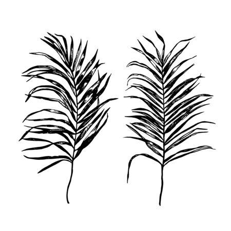 Palm Tree Leaf Silhouette. Vector Illustration EPS8. Palm leaf in black color. Banque d'images - 146087739