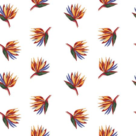 Strelitzia reginae crane flower pattern on white background. Wallpaper with tropical flowers. Perfect for textile, wrapping. Illustration