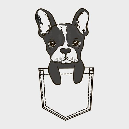 Cute dog Muzzle of frenchie buldog with bunny ears sitting in pocket. T-shirt print for kids apparel.
