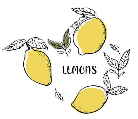 Fresh lemon fruits, collection of vector illustrations with leaves and text. Set with lemons. Illustration