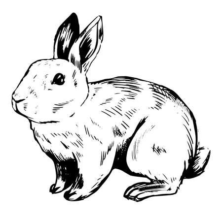 Vector graphic  illustration of bunny. Easter design element Illustration