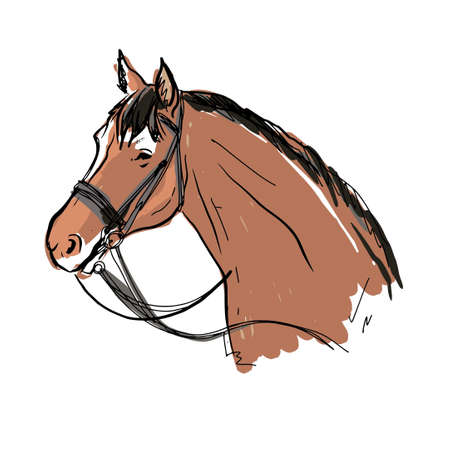 vector portrait of horse. morgan breed.brown horse Illustration