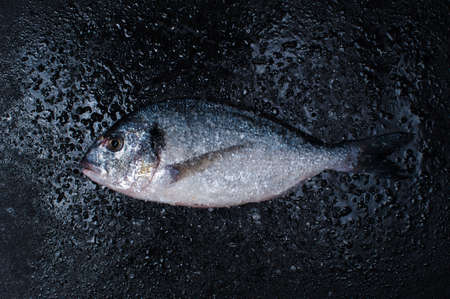 sparus: Raw dorada with salt on the dark wat stone table