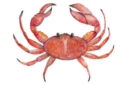 Crab painted with watercolors