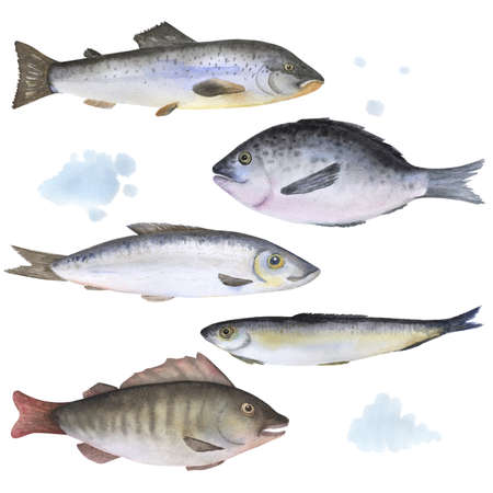 anchovy: Set of 5 fish painted in watercolor