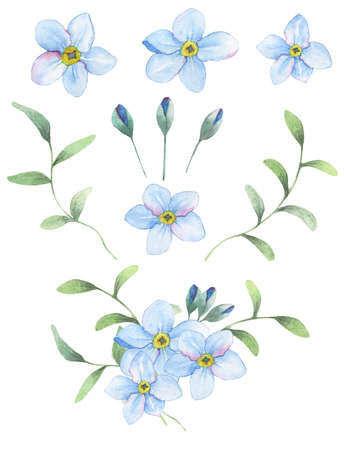 individual color: Foget-me-not flowers painted in watercolor. 9 isolated objects + bouqet from this elements. Stock Photo