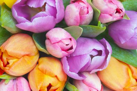 Bouqet of various tulips close-up