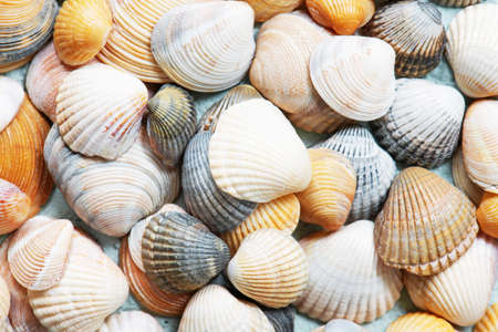 Background of various seashells, abstract travel top view composition