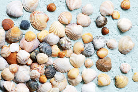 Seashells on the blue textured background, abstract travel top view composition