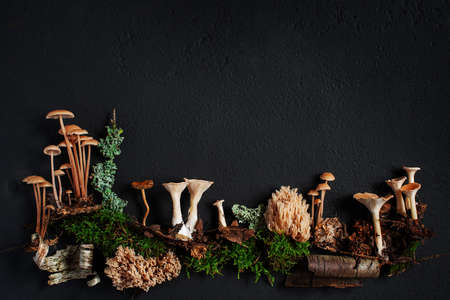 Background with elements of wild autumn forest on the black textured surface, copy space