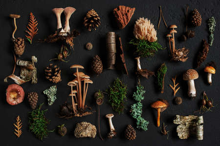 Elements of wiled autumn forest on the black textured background, top view