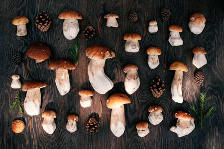 Fresh wild porcini on the wooden brown table, top view
