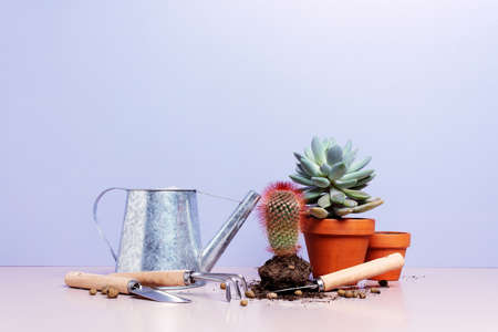 Indoor potted plants, concept of home gardening, care for indoor plants Stockfoto