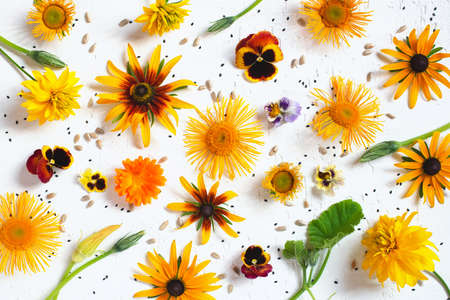 Pattern of autumn flowers on the white background, festive natural composition, flat lay