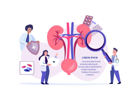 Doctors Nephrologists Scientist Examine, Diagnosing Kidney, Renal, Nephros.Renal Impairment Treatment.Nephatony Research Trial.Clinical Investigation.Medical Council Diagnostics.Flat Vector Illustration