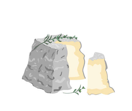 Gourmet French Valencay cheese with blue,white moldy rind, wrinkled crust.Cut piece of delicious soft chees with mold.Colored flat vector illustration of delicatessen food isolated on white background