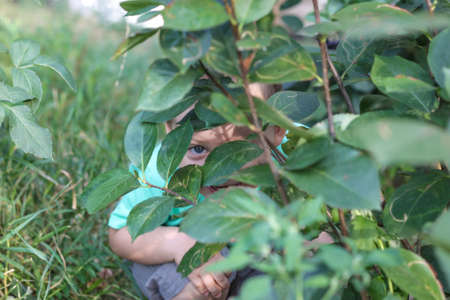 A child's gaze through the leaves. Game of hide
