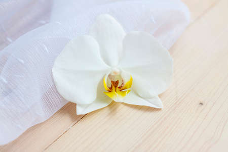 Spring lightness and tenderness. The freshness of the morning. Light composition with an Orchid flower and transparent fabric.