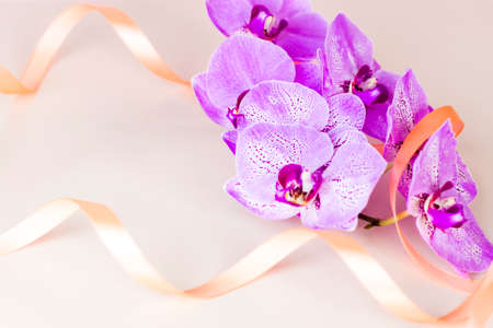 Beautiful orchids in a vase on a pink background. phalaenopsis close-up. Banner, panorama with space for text. Background for the postcard.