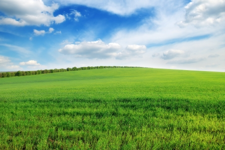 spring field Stock Photo - 13707747
