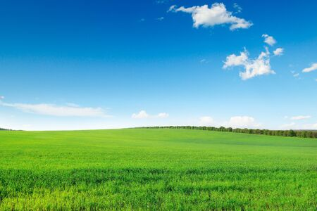 picturesque green field and blue sky photo