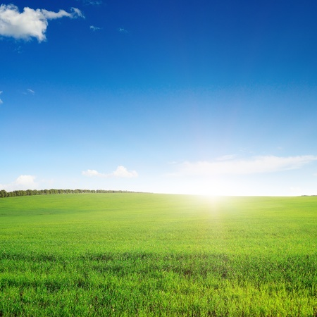pictorial field and blue sky