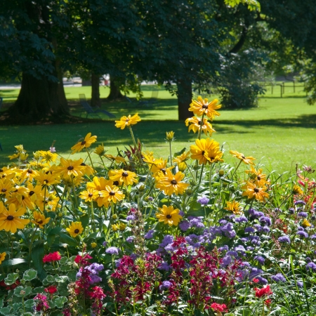 Multi colored flower bed on the background of the park Stock Photo - 14640572