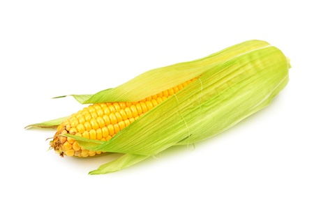 Corn cobs isolated on a white background photo